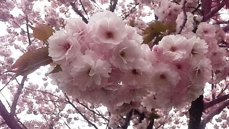 2011_04_20_13_33_14